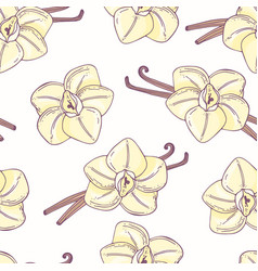hand drawn seamless pattern with vanilla vector image vector image