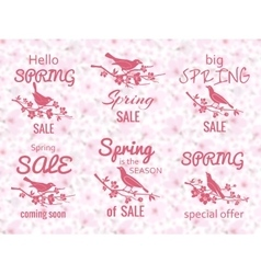 Spring sale labels with cherry blossom background vector image