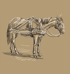 Brown horse in harness vector