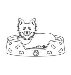 lounger for a pet a sleeping place dogcare of a vector image