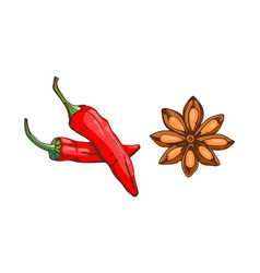 red chilli pepper with anise star food seasoning vector image