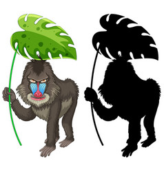 Set mandrill cartoon and its silhouette vector