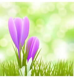 spring little flowers vector image vector image