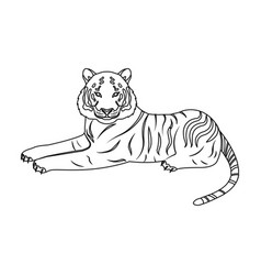 tiger a predatory animal the belgian tiger a vector image vector image