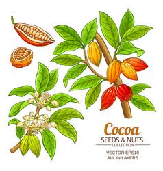 cocoa plant set on white background vector image