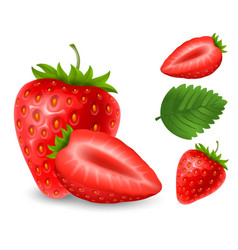 set of strawberry berries vector image