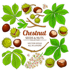 Chestnut elements on white background vector