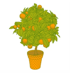 Citrus tangerine orange or lemon citrus tree vector image
