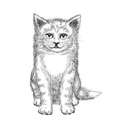 Doodle hand drawn kitten vector