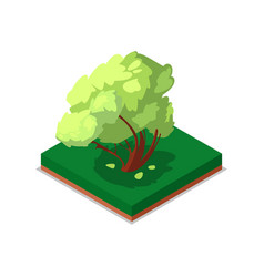 green maple tree isometric 3d icon vector image