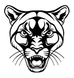 Head mascot cougar isolated on white vector