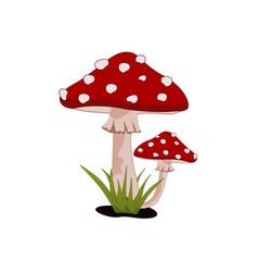 magic mushroom amanita muscaria fly agaric vector image