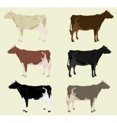 cow3 vector image vector image