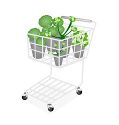 A Set of Asiatic Pennywort in A Shopping Cart vector