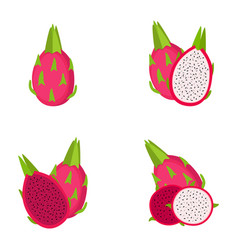 dragon fruit whole fruit slice vector image