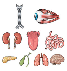 Human organs set icons in cartoon style big vector