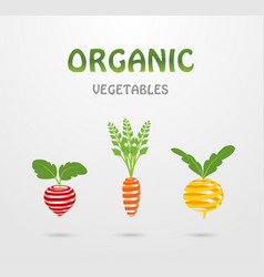 organic vegetables vector image