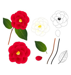 White and red camellia flower outline vector