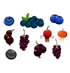 Fresh blueberries blackcurrant and briars fruits vector image vector image