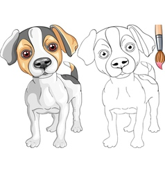 Coloring Book of Jack Russell Terrier vector image