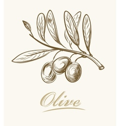 Fresh olive vector