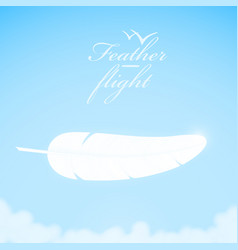 white feather in sky background vector image