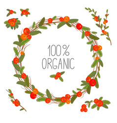 hand drawn wreath with red berries and branches vector image