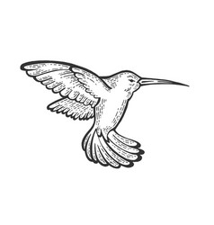 Humming bird sketch engraving vector