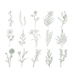 set of detailed botanical drawings of flowers vector image