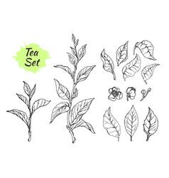 tea set 3 vector image