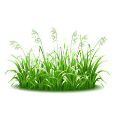 a thick tuft green juicy bright grass vector image