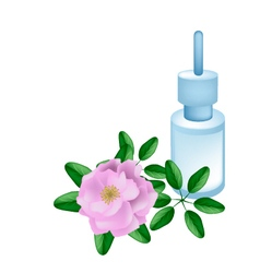 Essential Oil with Beautiful Pink Damask Rose vector