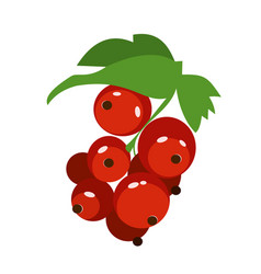 Red currant flat simple vector