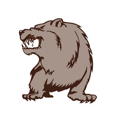 wild bear cartoon mascot animal cartoon character vector image