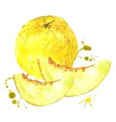 Watercolor melon summer hand drawn fruit vector image
