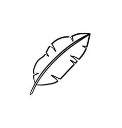 banana leaf hand drawn sketch icon vector image