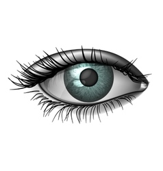 Photorealistic human eye close up vector