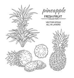 Pineapple set vector