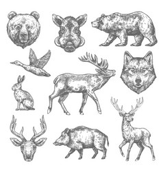 Sketch wild animal icons for hunting or zoo vector