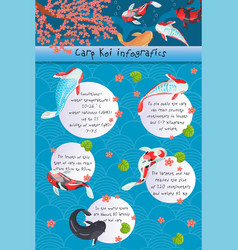 carp koi infographics features of different types vector image