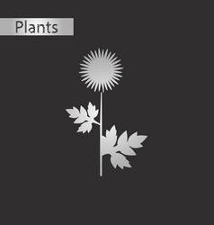 Black and white style icon of flower aster vector