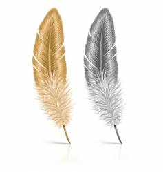 Feather isolated on white background vector