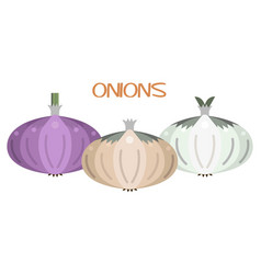 Onion icon set white red yellow and bulb vector