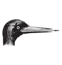 woodpecker head vintage vector image