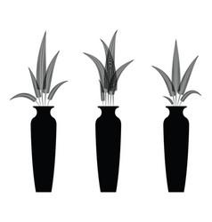 fern flowers in the vaes vector image