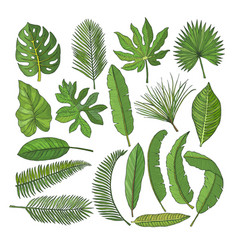 colored pictures set of tropical leaves vector image vector image