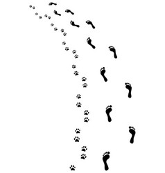 feet and paws vector image