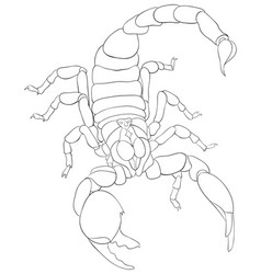 adult coloring bookpage a scorpion image for vector image