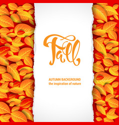 beautiful fall leaves blank vector image