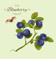 Realistic of blueberry vector image